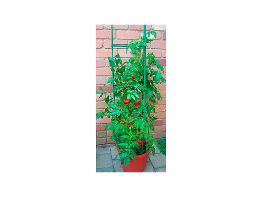 Инвентарь GREEN APPLE GTC-5 Опора для томатов 1.5м