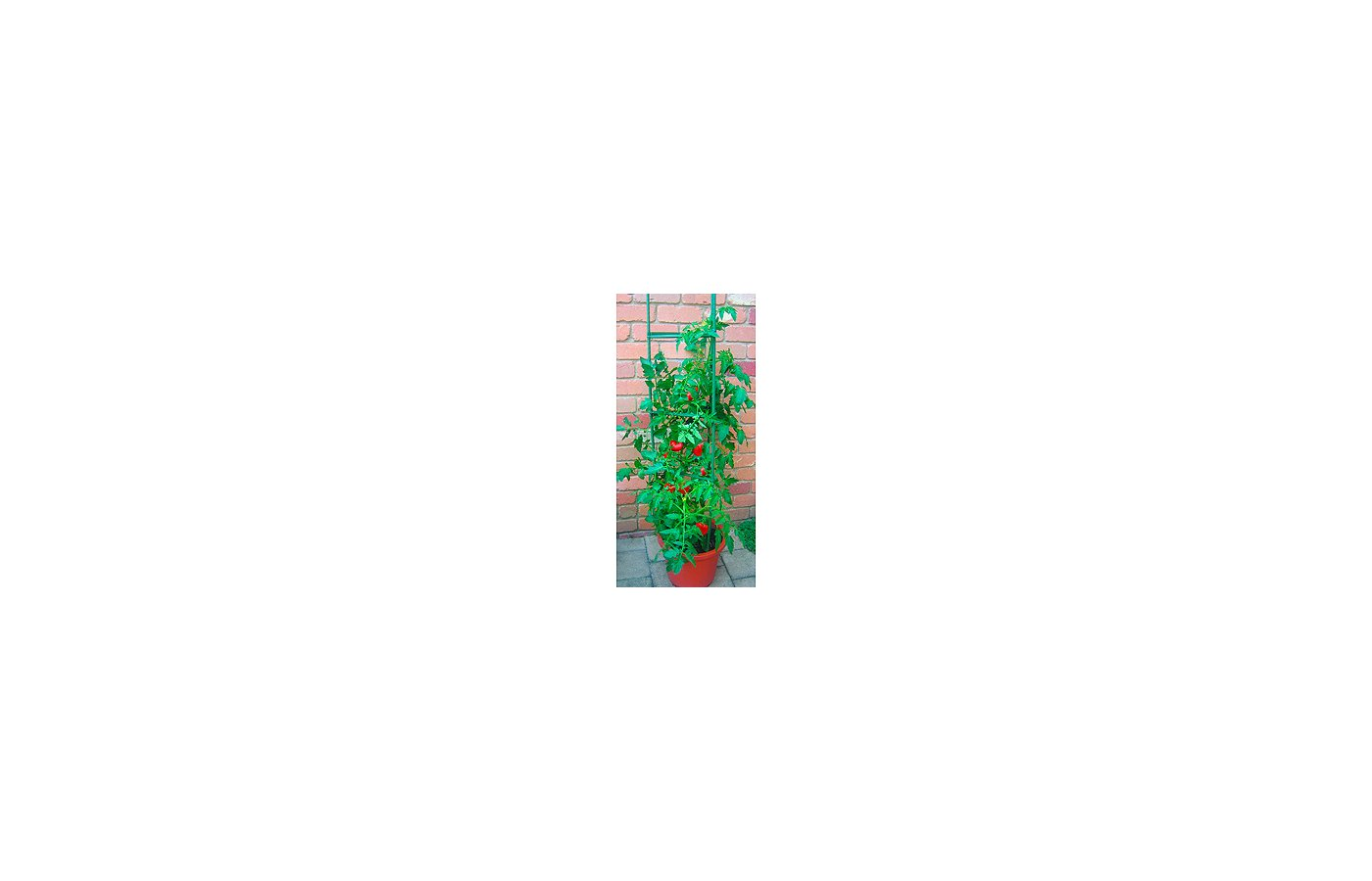садовые товары GREEN APPLE GTC-5 Опора для томатов 1.5м