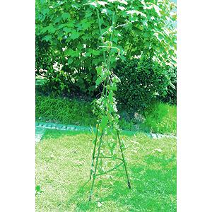 садовые товары Green apple